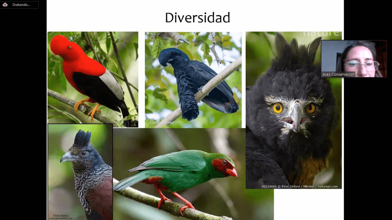 Taller aves urbanas dictado a los vecinos de El Tejar. 2